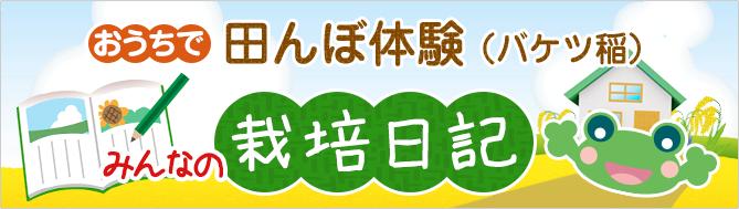 おうちで 田んぼ体験(バケツ稲) みんなの栽培日記